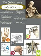 The Skeletal Joints's thumbnail
